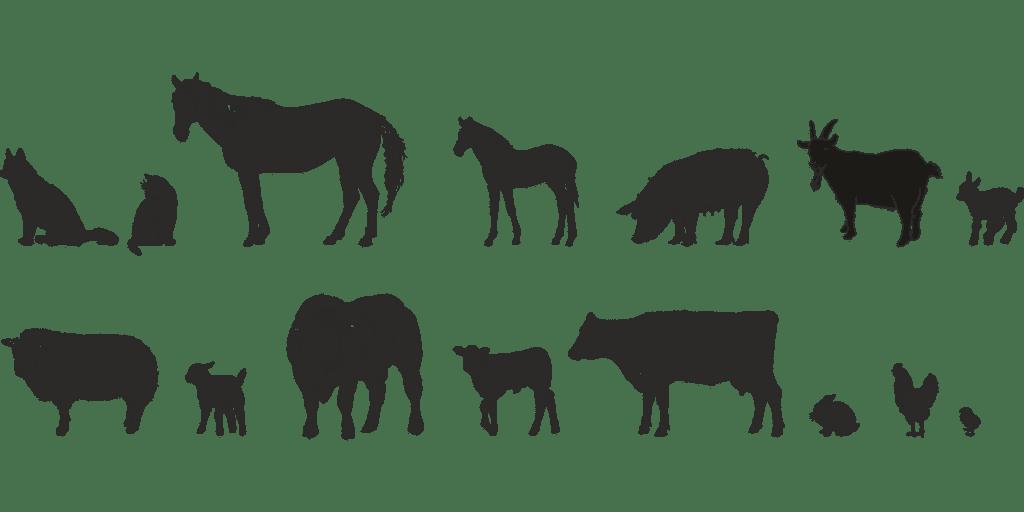 djur på spanska